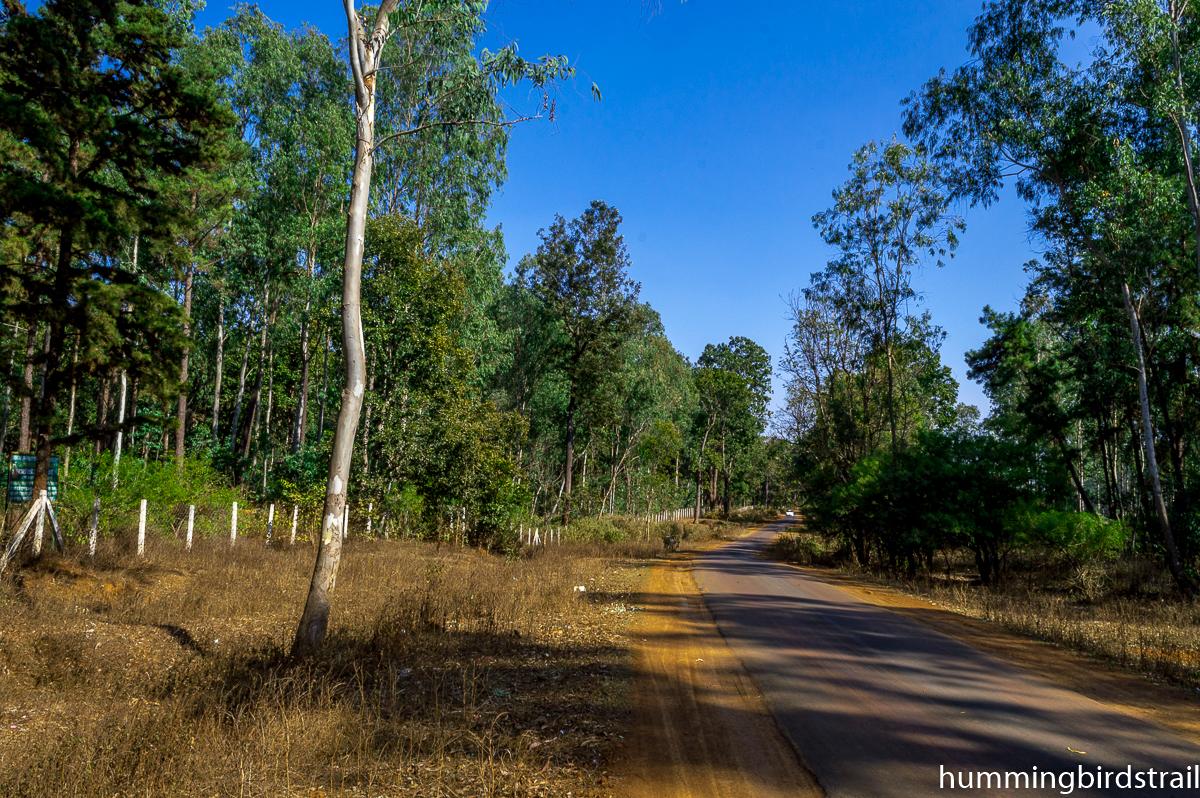 Beautiful roads of Amarkantak