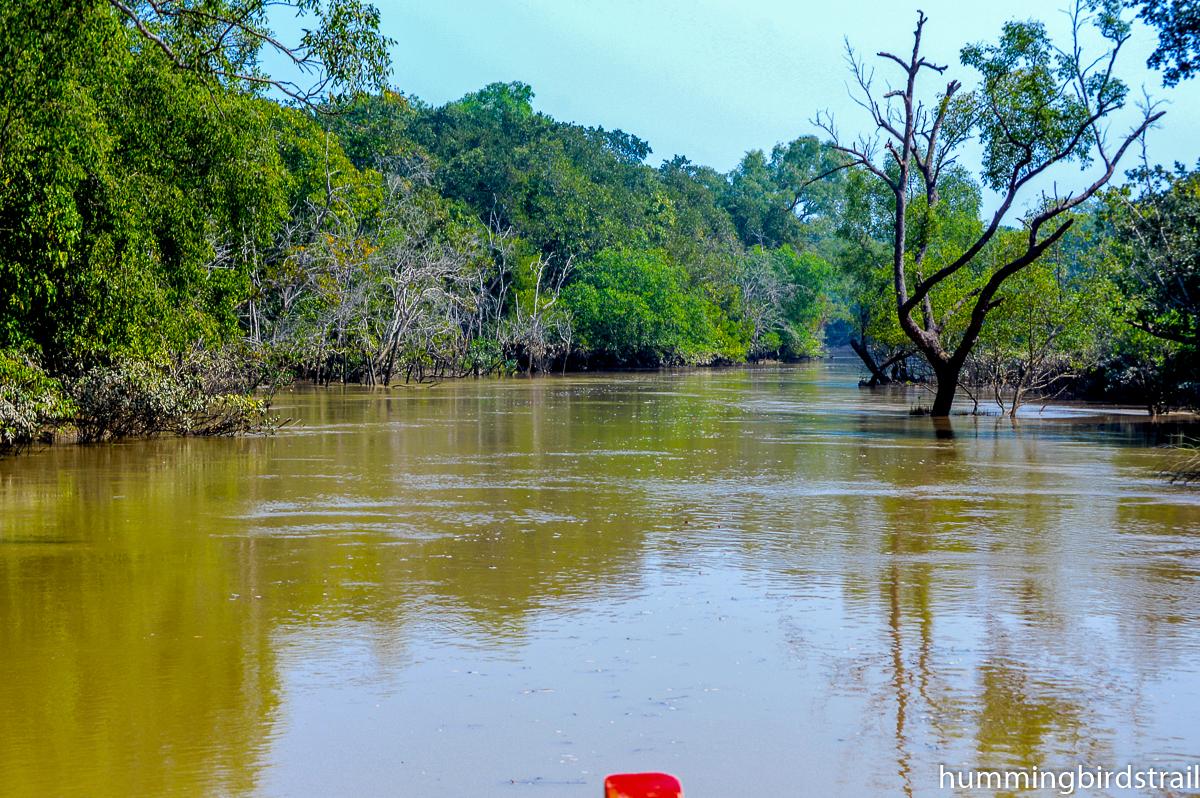 Adventurous water ways like rain forest